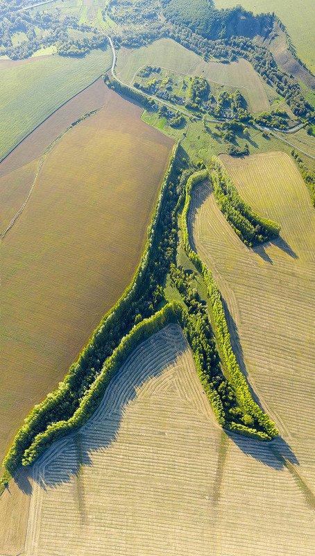 Россия, Тамбовская область, поля, коптер, дрон, пшеница,  Фигура великанаphoto preview