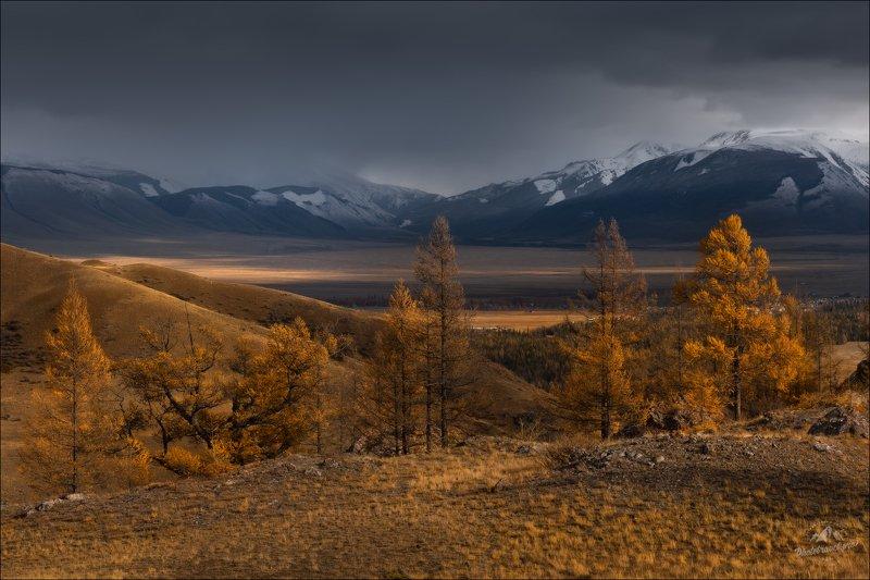 курайская степь, таджилу, тадилу, осень, северо-чуйский хребет, горный алтай, урочище, фототур Игра на контрасте ..photo preview