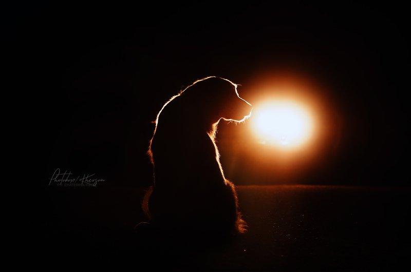 анималистика, силуэт, ночная съемка, собака Night dogsphoto preview