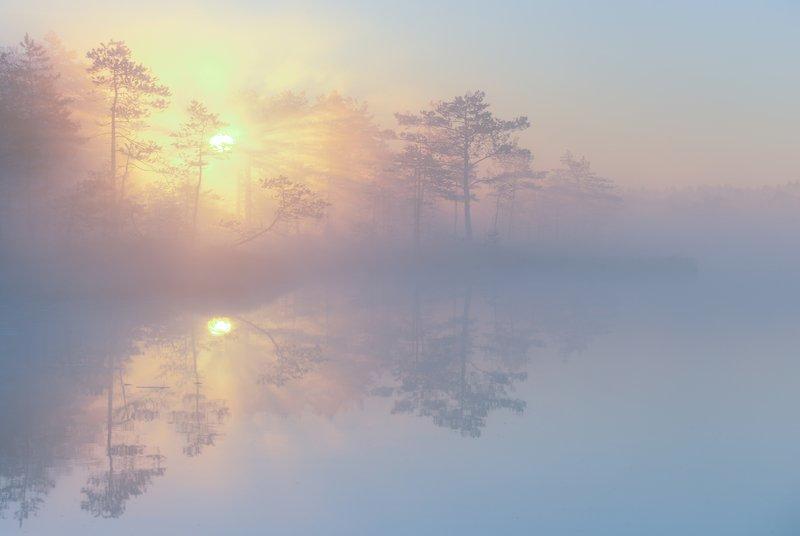 про утренний свет...photo preview