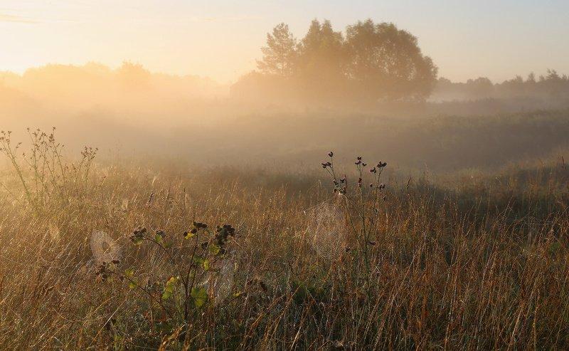 Раскинет осень сеть из паутиныphoto preview