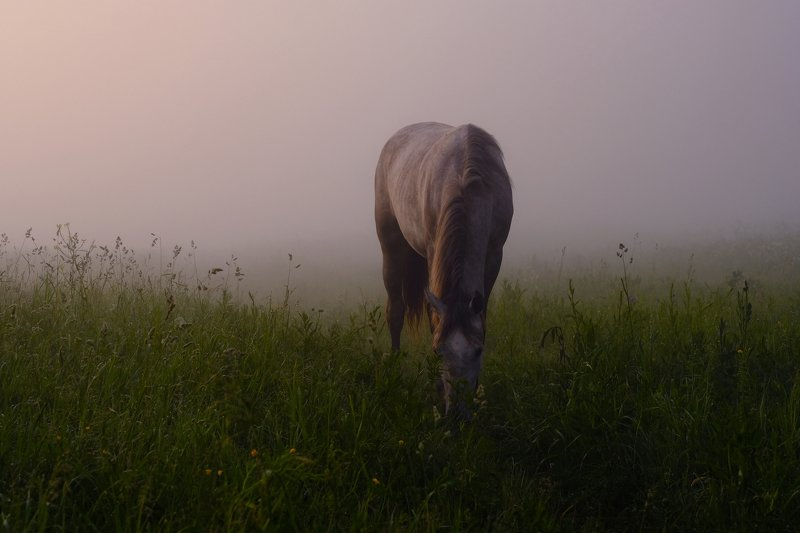 foggy horsephoto preview