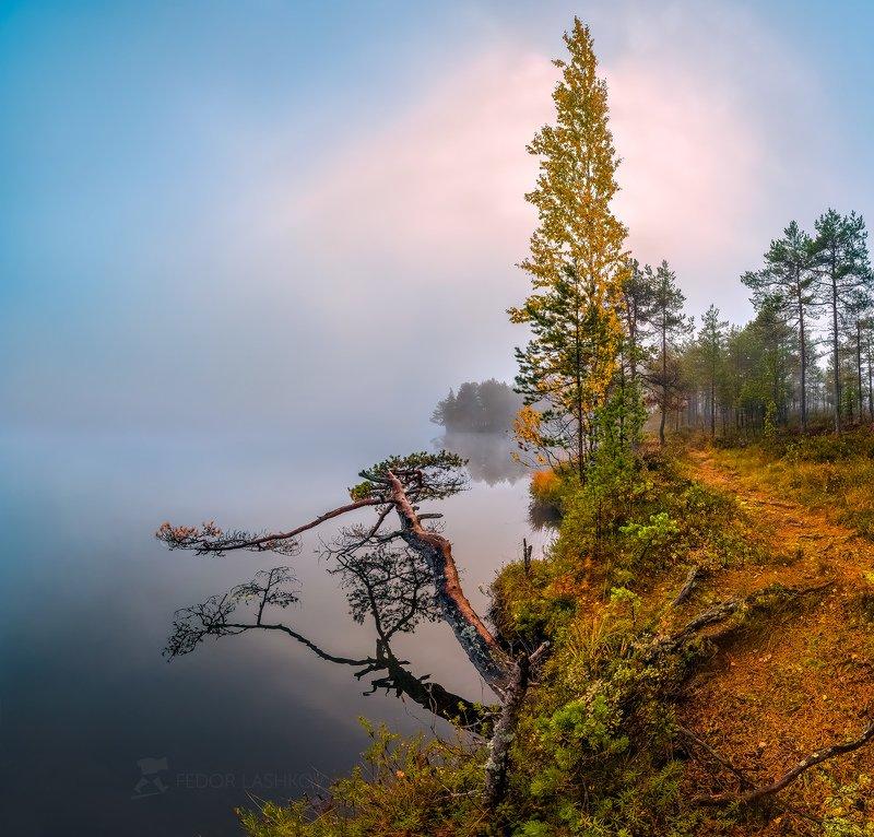 ленинградская область, сосна, отражение, покой, озеро, осень, небо, облака, рассвет, туман, берёза, дерево, берег, Тишина осениphoto preview