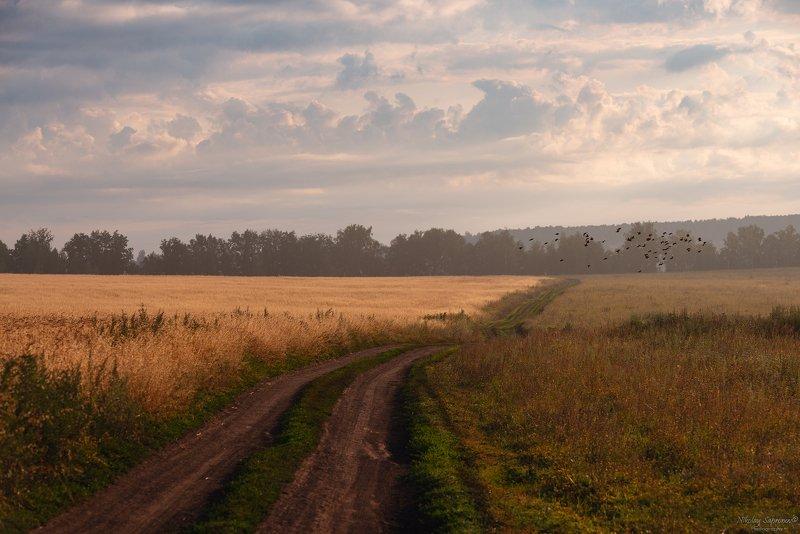 Тульская область, Красивая Меча, Лето, Рассвет, утро, Дорога, Птицы, Русский пейзаж, Поле \