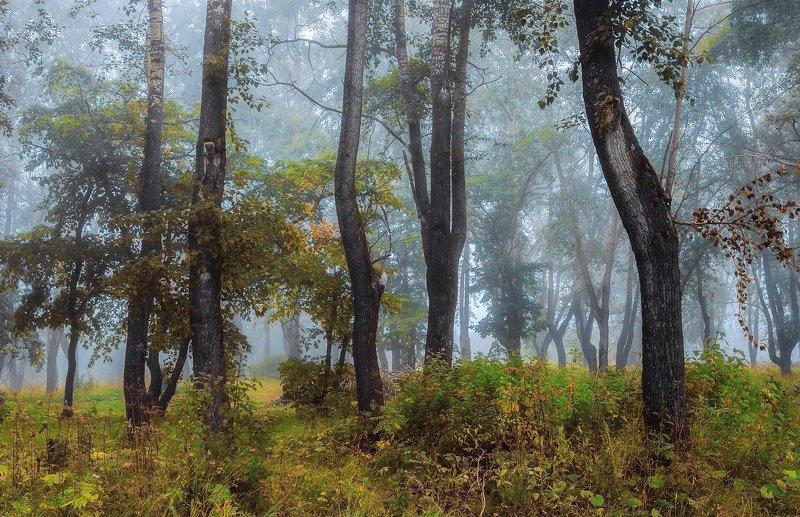 осень сентябрь лес туман утро деревья трава Первый осенний туманphoto preview