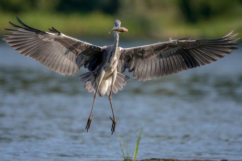 птицы,природа,лето А вот такая удрала....photo preview