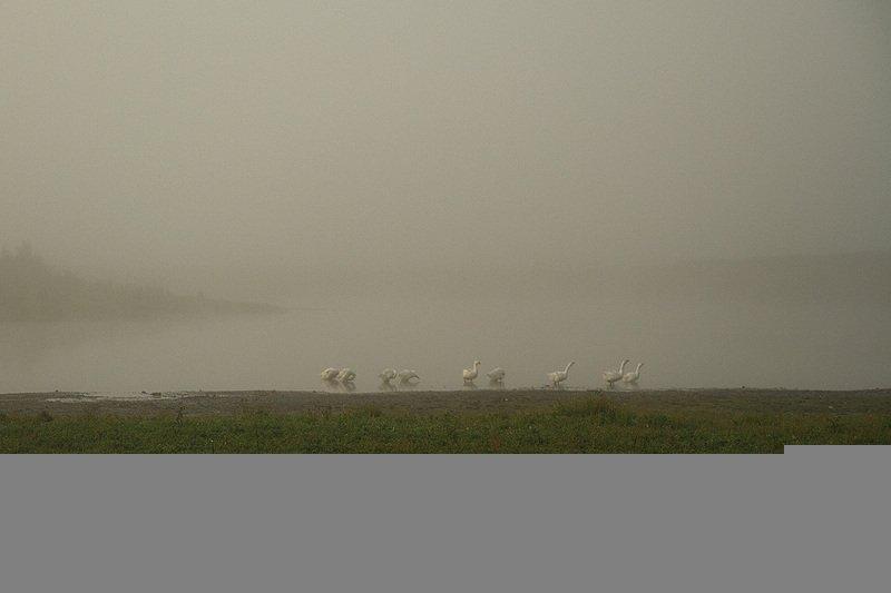 пейзаж, туман, река ай Туман на реке Айphoto preview