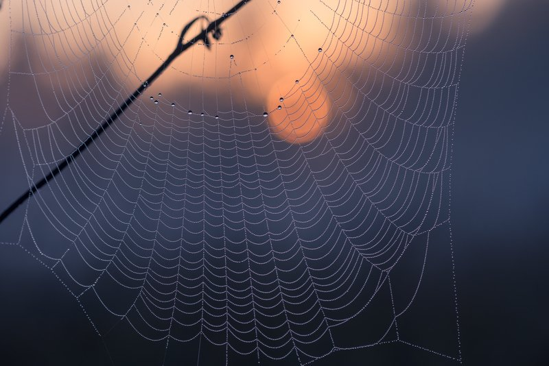 лето, рассвет, паутина Светаетphoto preview