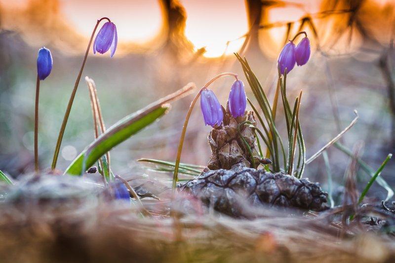 Холодный весенний расвет photo preview