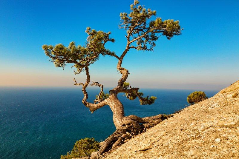 крым, черное море август 2019 Побережье Черного моря.photo preview