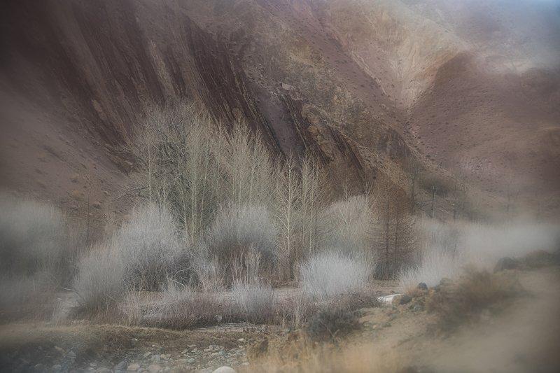 Алтайский пейзаж веснойphoto preview