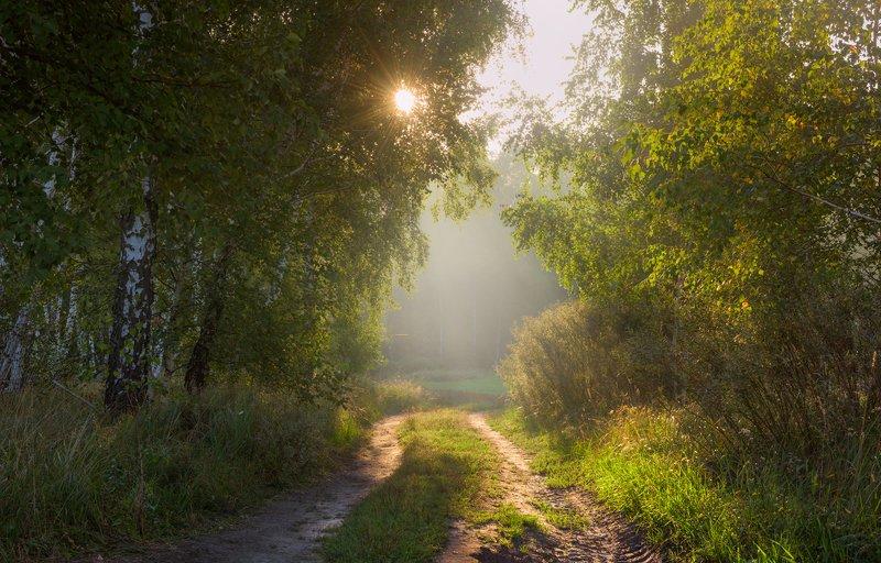 лето, август, рассвет, лучи Рассветные грёзыphoto preview