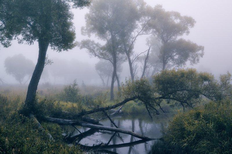 Омуток в тумане ...photo preview