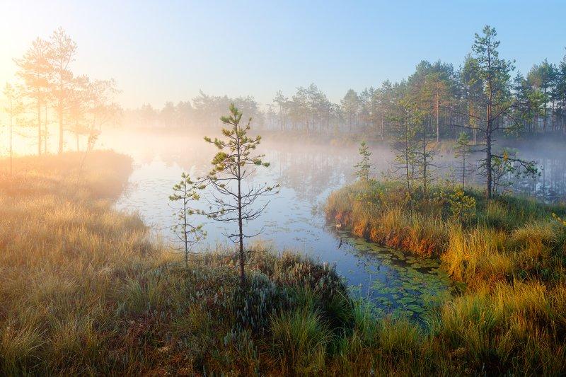 ранняя осень...photo preview