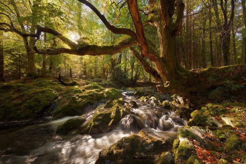 ireland, autumn Autumn in Ireland фото превью