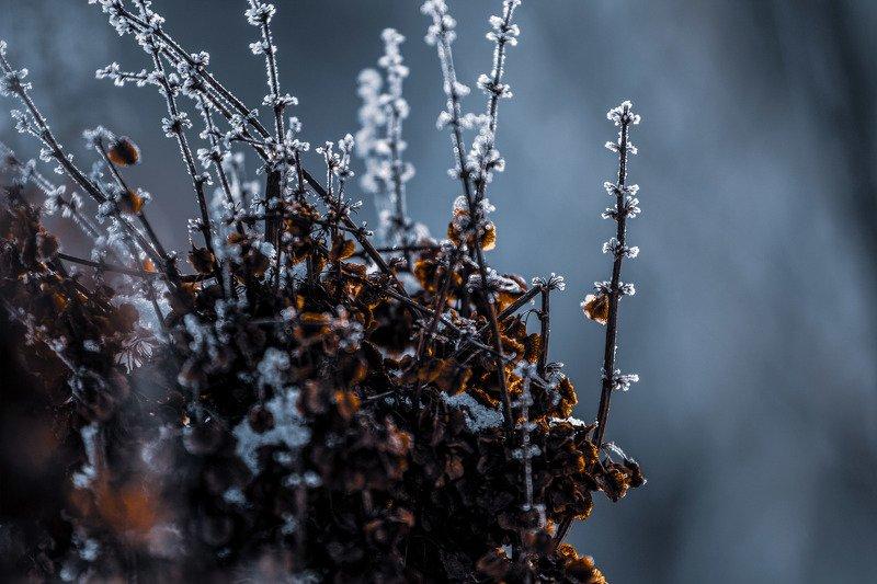 иней макро растения зима  Морозко photo preview