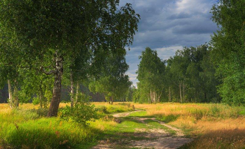 луг, лето, июль, вечер, тучи Предгрозовая тишинаphoto preview
