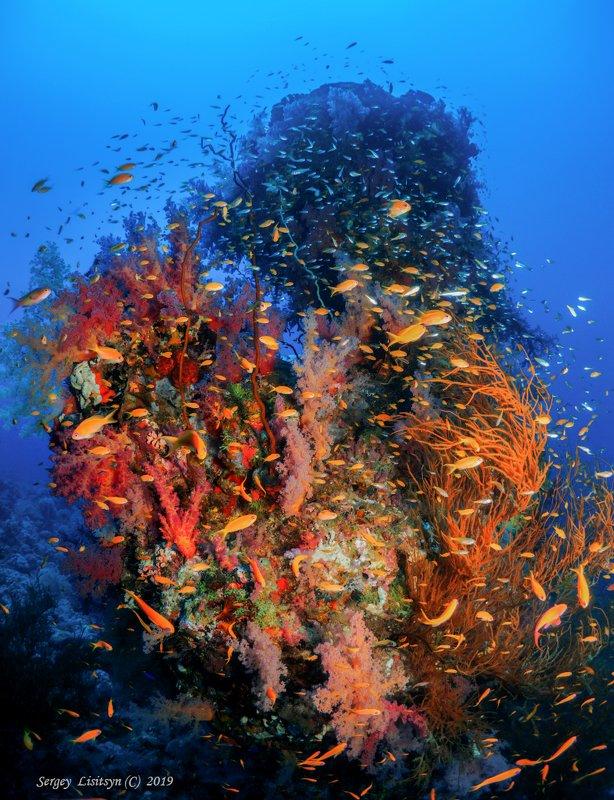 Коралловый рай.photo preview