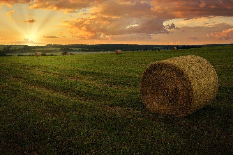 закат, поле, сено Июньский закат над полем фото превью