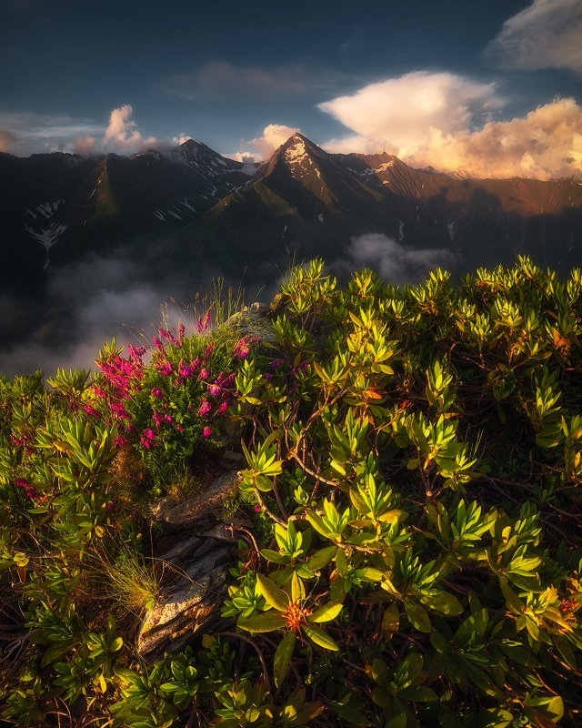 горы, цветы, рододендрон, псеашхо, кавказский заповедник, кавказ, пейзаж Псеашхо Сахарнаяphoto preview