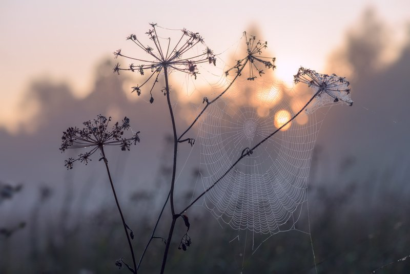луг, рассвет, лето, сумерки, туман, паутина Забрезжил рассветphoto preview