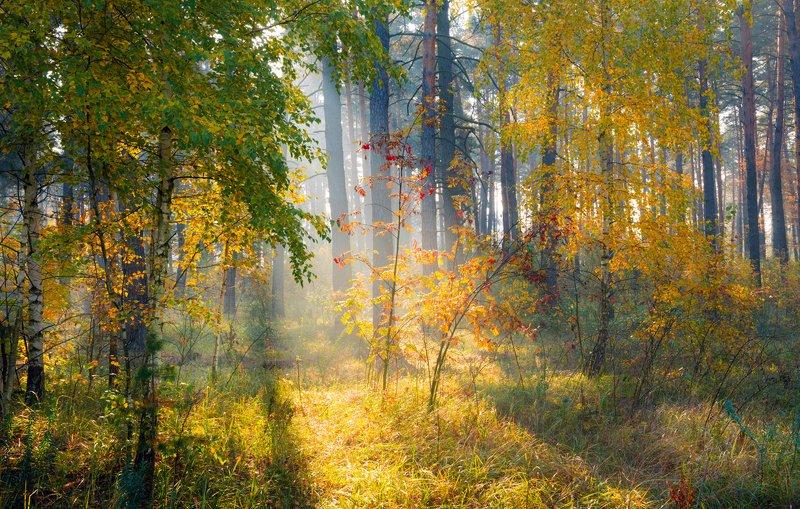лес, осень, октябрь, утро, рассвет, туман, лучи Утреннее великолепиеphoto preview