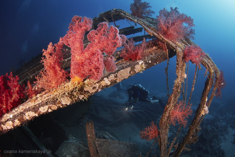 underwater wreck diving  Красные кораллыphoto preview