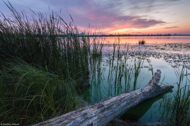 Болотистые берега Днепра фото превью