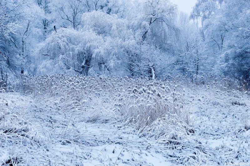 Зимняя сказка фото превью