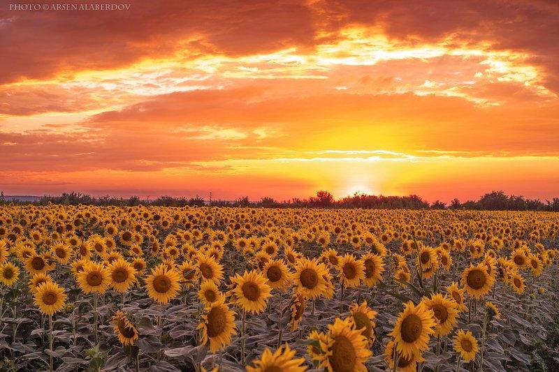 поле, закат, вечер, солнце, облака, лето, подсолнухи, оранжевый ОРАНЖЕВОЕ НЕБО, ОРАНЖЕВОЕ СОЛНЦЕ...photo preview
