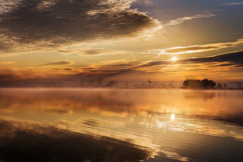 озеро, утро, рассвет,отражение,солнце,лето Золотой рассветphoto preview
