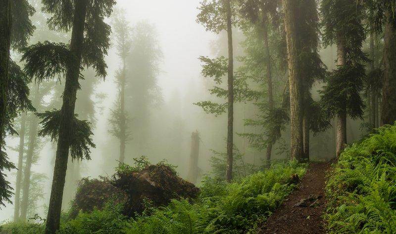 Тропами волшебного лесаphoto preview