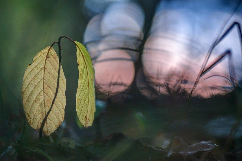Про осень.photo preview