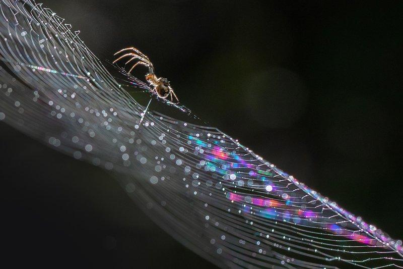 паутина, луч, паук В луче светаphoto preview