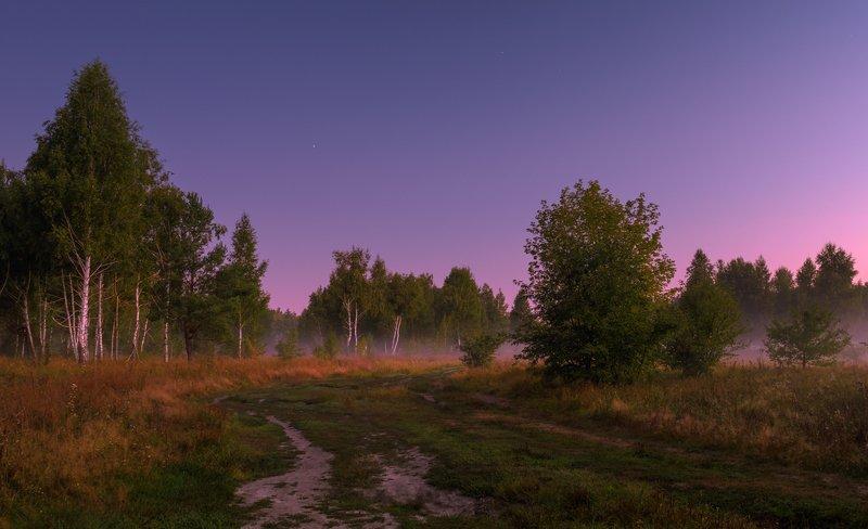 лето, , август, луг, рассвет, туман, собака, боксёр На исходе лета.Рассветная хроникаphoto preview