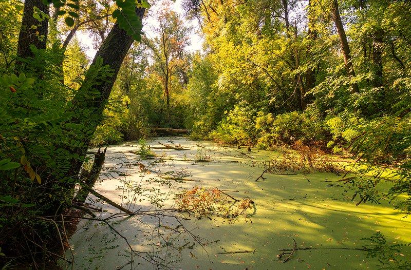 landscape, пейзаж, болото, тина, ряска, водоем, деревья, осень, кусты болотцеphoto preview