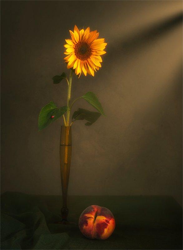 still life, натюрморт,    винтаж,    цветы,  подсолнух, персик, еда, божья коровка, насекомое, минимализм, луч света, натюрморт с подсолнухом и персикомphoto preview