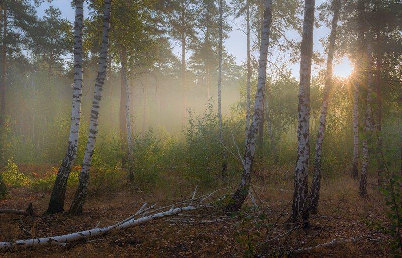 лес, осень, сентябрь, утро, рассвет, свет, лучи, дымка Сентябрьское утроphoto preview