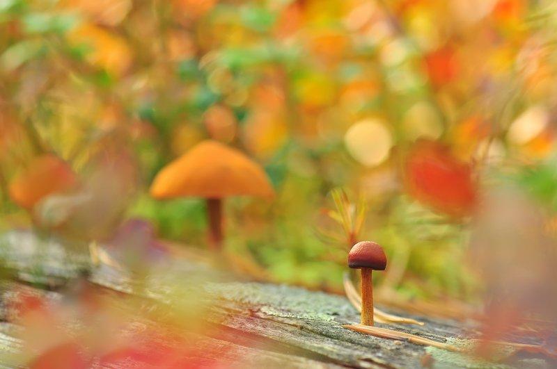 Осенняя зарисовочка :)photo preview