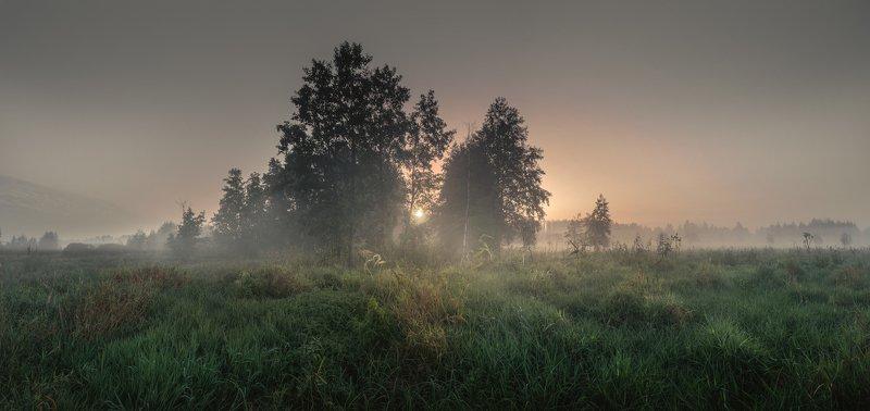 У границы лесаphoto preview
