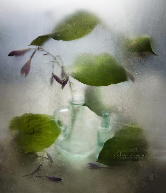 полиэтилен, натюрморт С листьями хостыphoto preview