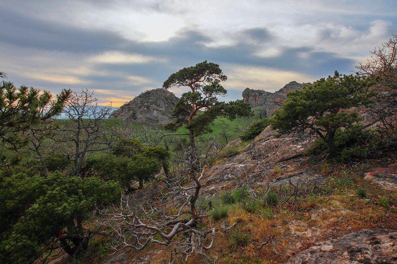 горы,вершины,пейзаж,небо,деревья,дагестан,природа Горный пейзаж..photo preview