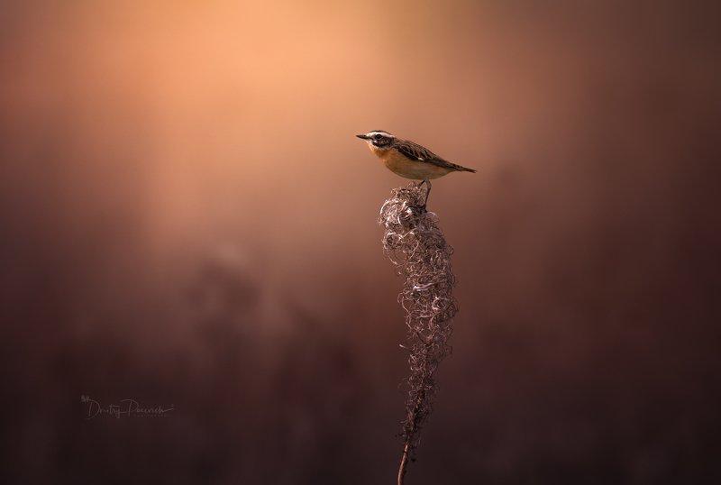 природа, лес, животные, птицы Встречая осеньphoto preview