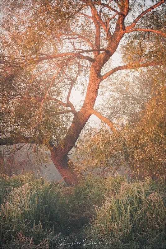 утро, рассвет, туман, осень, осенняя, осенняя пора, пейзаж, дерево, река Осенняяphoto preview