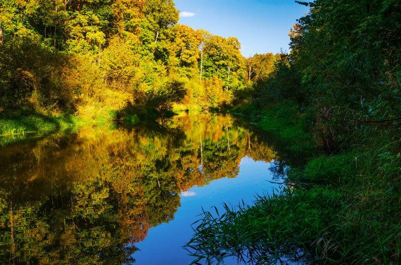 nevant60, пейзаж, красота, природа Лесной осенний ручейphoto preview