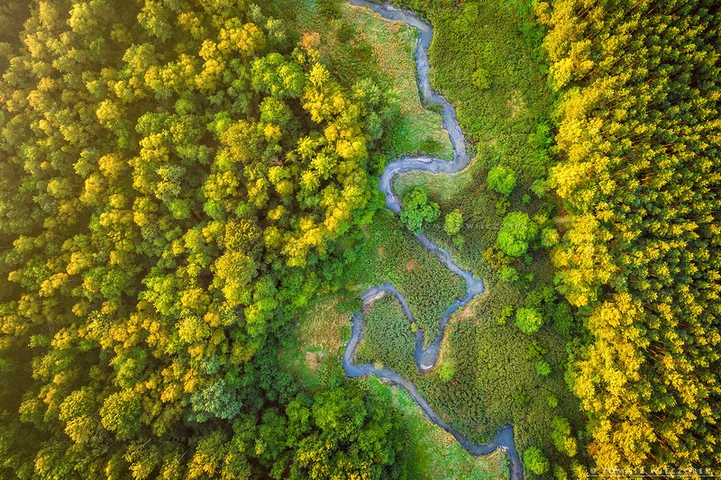forest, drone, dji, air, poland, polish, landscape, sunrise, sunset, colours, summer, awesome, amazing, adventure, travel, beautiful, morning, river, meandering At the bottom of the forestphoto preview