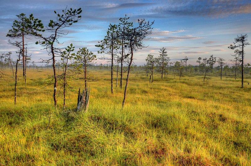 карелия, болото, деревья, закат, солнце Карельские болотаphoto preview