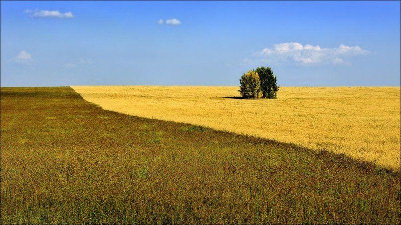 рязанщина, лето, поле, парочка Счастливая парочкаphoto preview