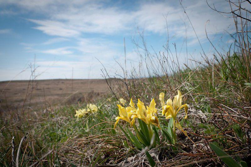 Цветение ирисов в Крымуphoto preview