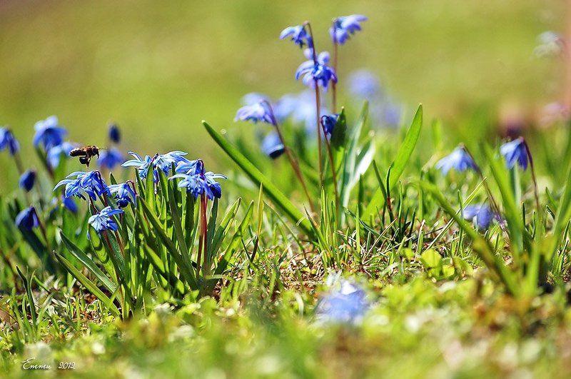 природа, весна, трава, цветы Веснаphoto preview